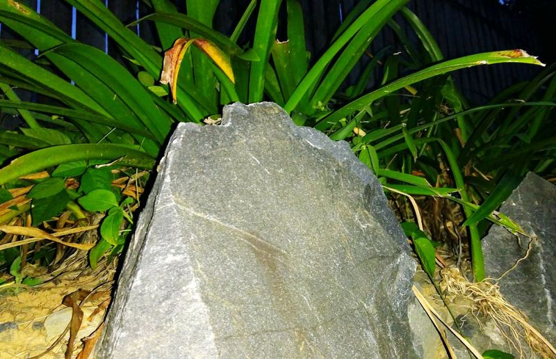 Garden Rock night photography Outdoors Close-up No People Plant Garden Photography