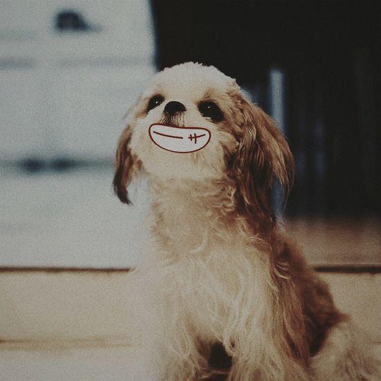 Dog Smiling Redhead Clown Close-up