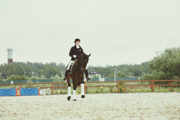 mirror Horses Horseriding