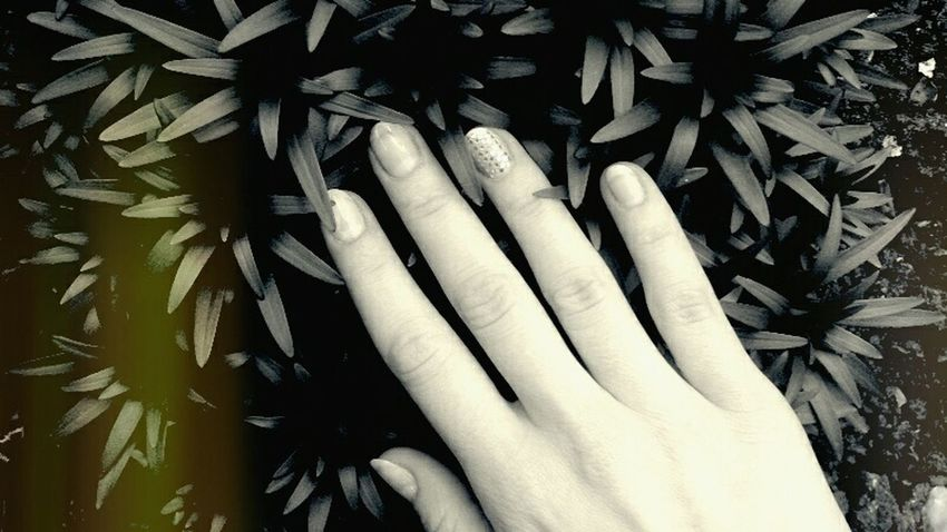 🌿Home Hand