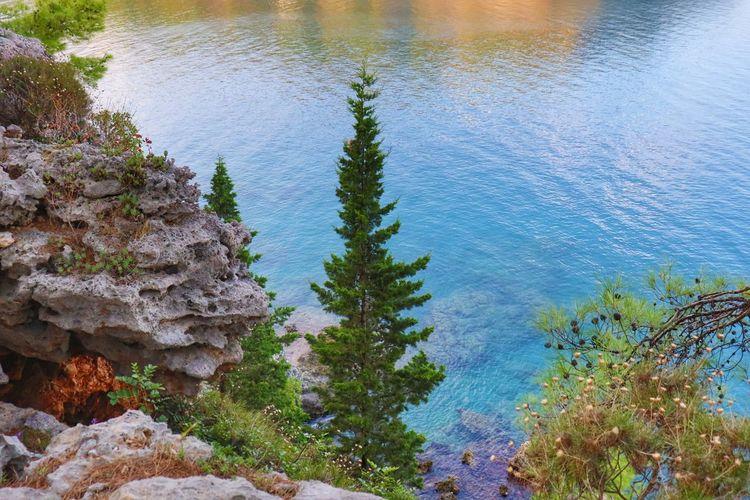 Sea Tree Water