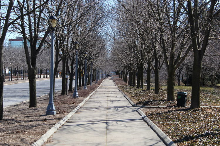 Tree Bare Tree Branch Shadow Sky Treelined Walkway