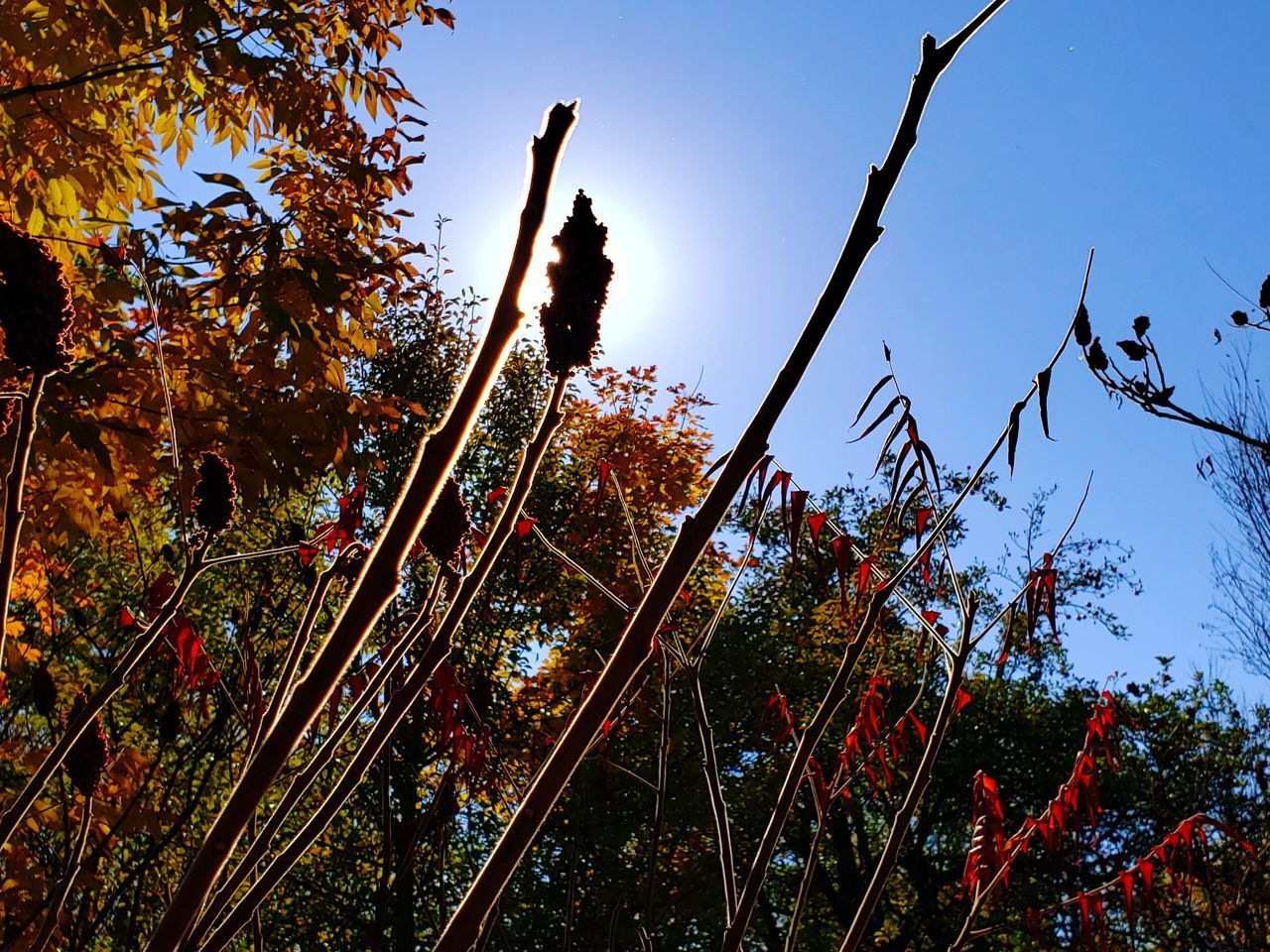 plant, tree, sky, growth, low angle view, nature, no people, day, beauty in nature, outdoors, tranquility, branch, clear sky, land, sunlight, tranquil scene, non-urban scene, autumn, blue, scenics - nature