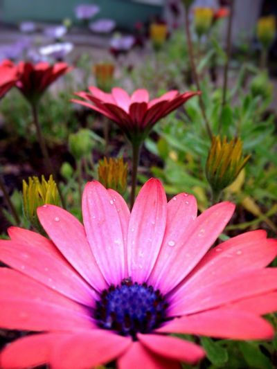 Rain Water Droplets Colors Colorful Nature Nature_collection Flowers Flower Flower Collection Nature Photography Flaura Colors Of Nature Flowers,Plants & Garden Pink Flower Showcase April
