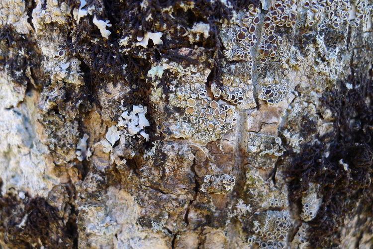 Full frame shot of rock on tree trunk