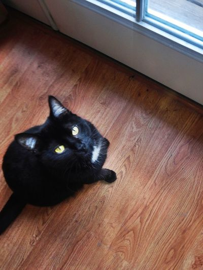 This Black Cat Stares With Attitude she is so very over it First Eyeem Photo Yellow Eyed Cat Staring Black Cat Angry Cat Cat In Sunlight Staring Downward Angle