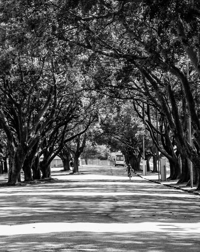 The way Tree Nature Road Outdoors Street Beauty In Nature Tranquility Day Scenics No People Sky