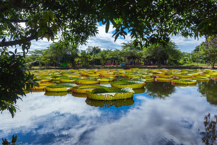 Beauty In Nature Day Floating On Water Garden Green Color Growth Lake Leaf Lotus Water Lily Nature No People Ornamental Garden Outdoors Park Park - Man Made Space Plant Plant Part Reflection Tranquility Tree Water Waterfront