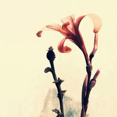 Pantone Colors By GIZMON TheMinimals (less Edit Juxt Photography) Nature NEM Still Life