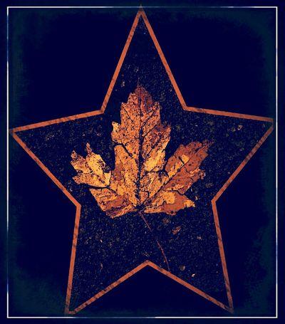 Falling Star. PicArts Spring 2013