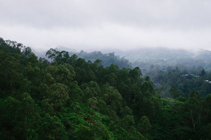 Tree covered hills in Flores, Indonesia Beauty In Nature Cloud - Sky Day Green Green Color Growth Hill Idyllic Landscape Lush Foliage Mountain Mountain Range Nature No People Non Urban Scene Non-urban Scene Outdoors Remote Scenics Sky Tranquil Scene Tranquility Tree Valley Weather