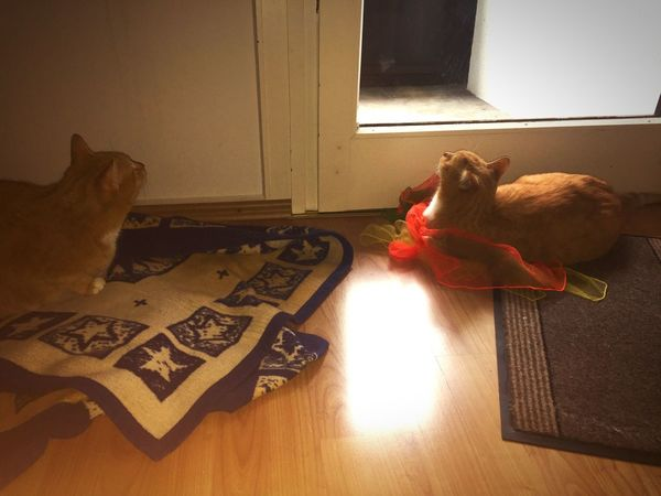 Window View Catch The Moment Two Cats Brother Love Brother And Brother Brothers For Life Katzenfotografie Catlovers Cat Power Togetherness Together Forever Cats Of EyeEm Pet Portraits Cats 🐱 Cat Portraits