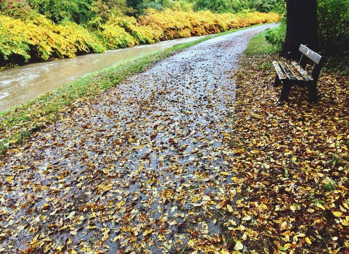 Autumn 🍃🍁🍂 Wienerwald  Shrubbery Way Leaves Creek Water Bench Rainy Days Rain Autumn Change Nature Day Outdoors Beauty In Nature Fallen Tranquility No People Tranquil Scene Scenics
