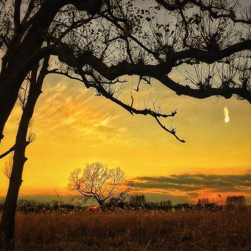 最寄りのサファリパーク的な Beautiful Nature Silhouette Beautiful Day IPhoneography Peace And Love Beautiful View Sunset Silhouettes Myfavoriteplace 動物は 狸か狐 時々雉もσ(^_^;)(笑)