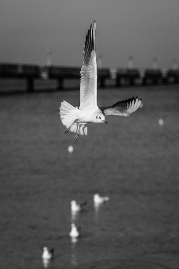 Close-up of seagull flying over lake