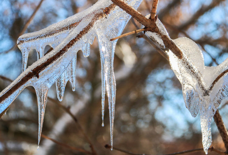 Cold Temperature Winter Frozen Focus On Foreground Ice Plant Close-up Tree No People Day Nature Branch Beauty In Nature Frost Tranquility Outdoors Plant Stem Icicle Weather Seasons Frosting
