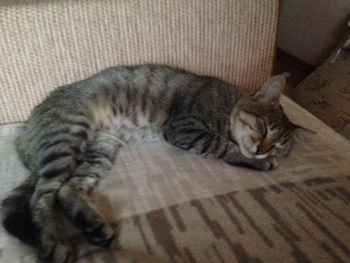 Cat Pets Funny FUNNY ANIMALS Rare Beauty