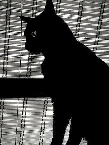 Black Cat Photography Lovecats Blackandwhite My Little Love Cats Black Cat Best Friend Samsung S7 Edge Samsung Galaxy S7 Edge