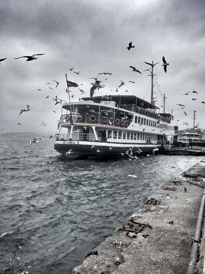içimiz okyanus olmuş ken . göz yaşları bizi bogmaya yetmez. ... Summer Siyahbeyaz Istanbul Turkey Sun_collection Cekiyorum Like4like Kadrajturkiye Sunset Silhouettes Life Is A Beach Fotograf Martılar Vapur Ve İstanbul Gökyüzümavi Benimkadrajim Mevsim Yanlızlık