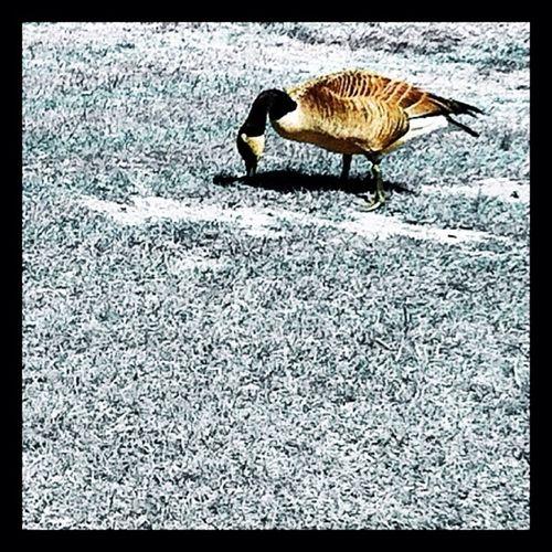 Bird on floor