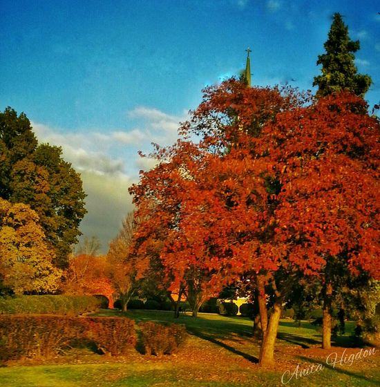 Autumn Afternoon. Nature Nature Photography Autumn Autumn Color Beautiful Nature Beautiful Day