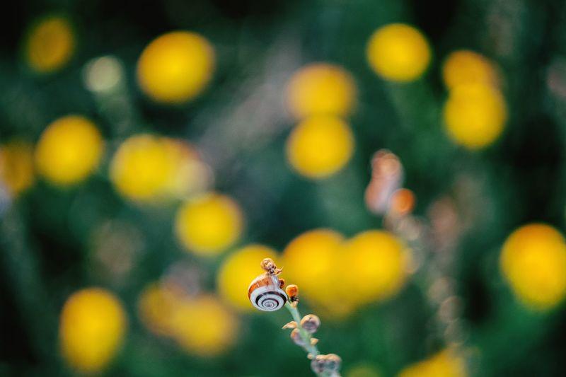 Snail On Buds