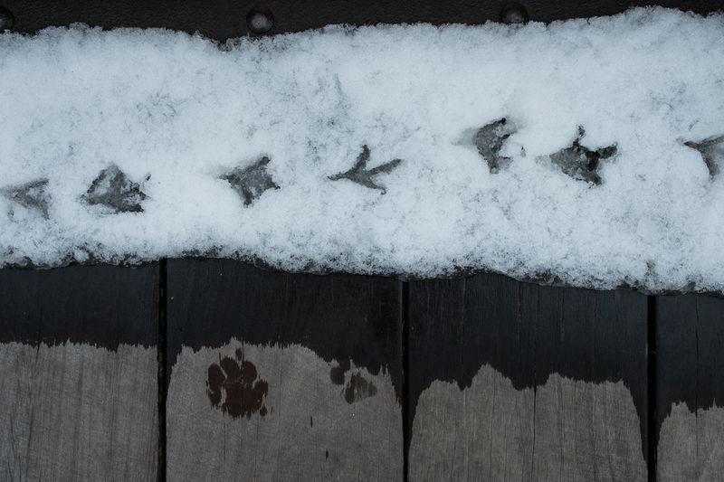 Close-up of snow covered wood against wall