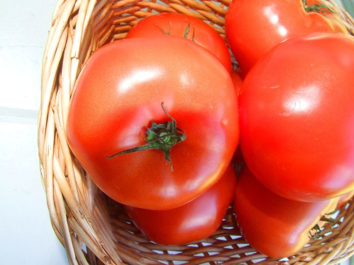A basket of organic tomatoes Ingredients Tomatoes Up Close Basket Close-up Day Food Food And Drink Freshness Healthy Eating Healthy Vegetables Indoors  No People Organic Organic Tomatoes Organic Tomatos Red Ripe Tomatoes Table Tomato Tomatoes Vegetable Vegetables Photo