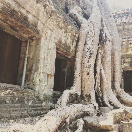 Temple Ankorwat Ankor Wat Ankor Thom Tomb Raider Temple Moviesight Sightseeing Ta Prohm