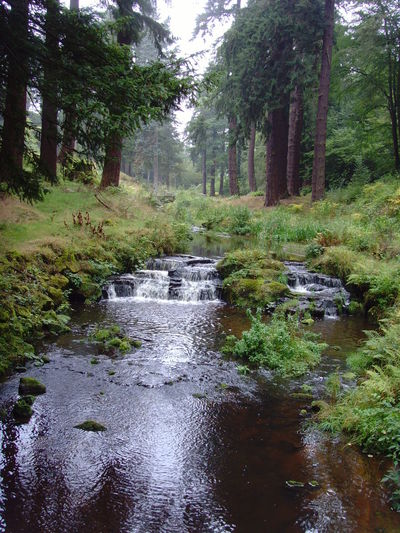 Beauty In Nature Cragside Day Flowing Flowing Water Forest Grass Green Green Color Growth Idyllic Lush Foliage National Trust Nature No People Non-urban Scene Outdoors Plant Scenics Stream Tranquil Scene Tranquility Tree Water