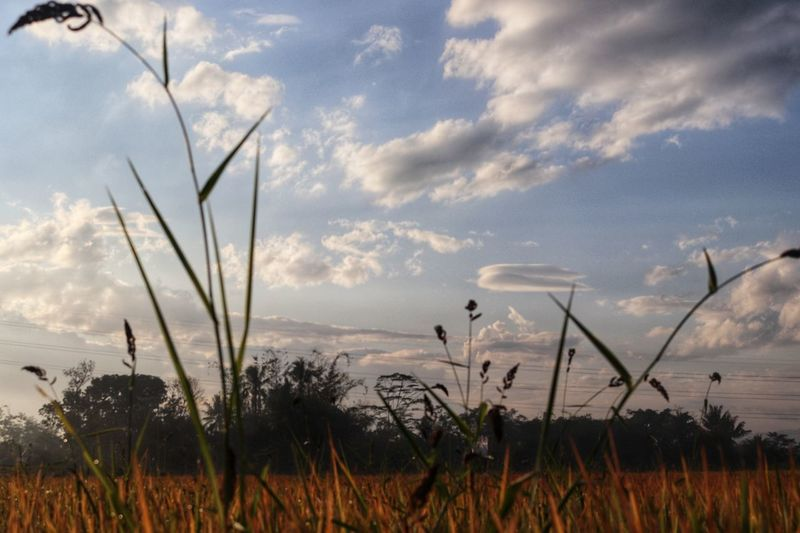 cloud and sky, Nature Morning Family Happy Sky And Clouds EyeEm Nature Lover EyeEmNewHere Plant Life Oryzasativa Grassy EyeEm Nature Lover EyeEm Indonesia EyeEm Is Here Water Irrigation Equipment Sky Grass Plant Cloud - Sky Landscape