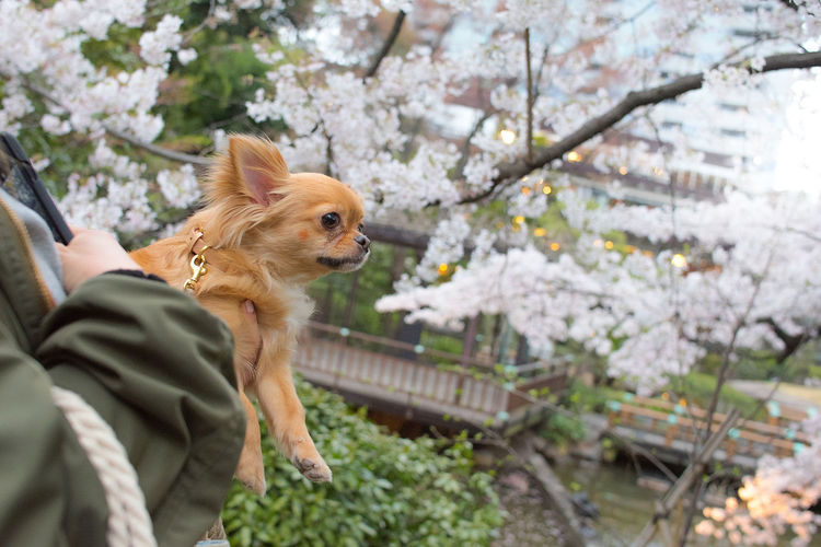 Dog with flowers on tree