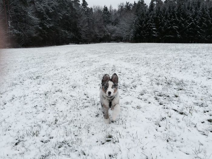 Babu was young No People Trees Forrest Outdoor Young Snow Animal Dog Shades Of Winter