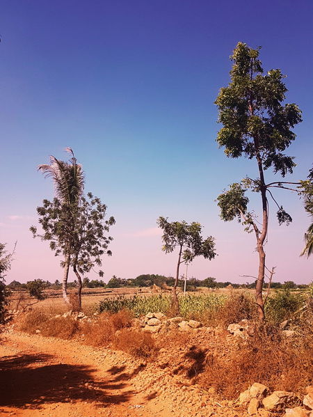 EyeEm Selects EyeEmNewHere India Karnataka Kamakeri Belgaum  Belagavi Nature Tree Sky Beauty In Nature Outdoors Scenics Landscape Day Rural Scene Sunset No People Close-up Clear Sky Flower