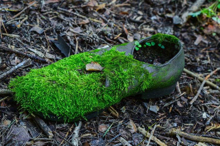 Green Color Leaf No People Nature Plant Boot Twilight Moss Mossyforest Wood Find In The Wood Wood Photography Green Cone Beauty Nature Macro Macro Photography Macro Nature Plants Old Boot Twilight Photo