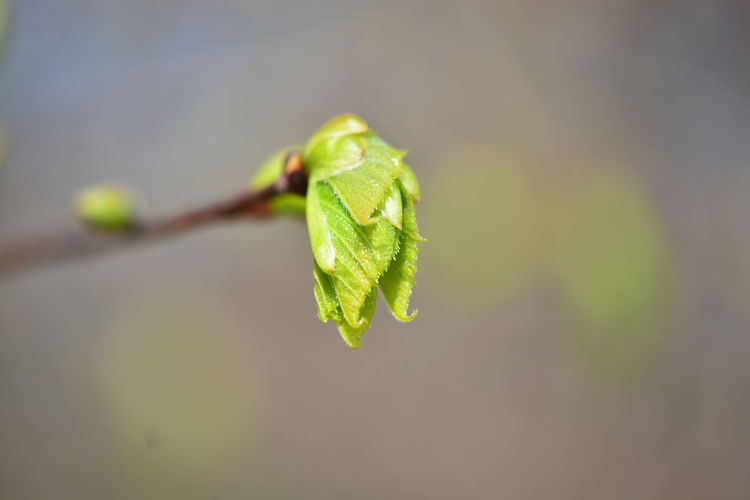 Plant Part Leaf Close-up Plant Growth Focus On Foreground Nature Green Color No People Day Freshness Beauty In Nature Selective Focus Outdoors Twig Beginnings Food And Drink Food Healthy Eating Vulnerability