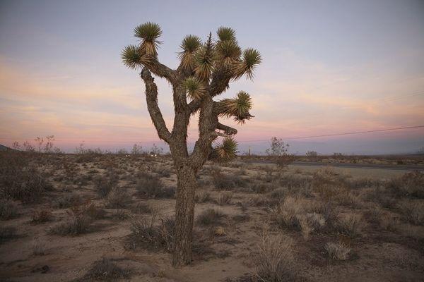 Landscape Mojave Roadtrip Open Edit Yucca Joshua Tree High Desert Sunset Sunset_collection Deserts Around The World