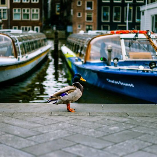 Bird Animal Photography Animal In The City Cloudy Day Amsterdam Canals Boats Water The Street Photographer - 2017 EyeEm Awards