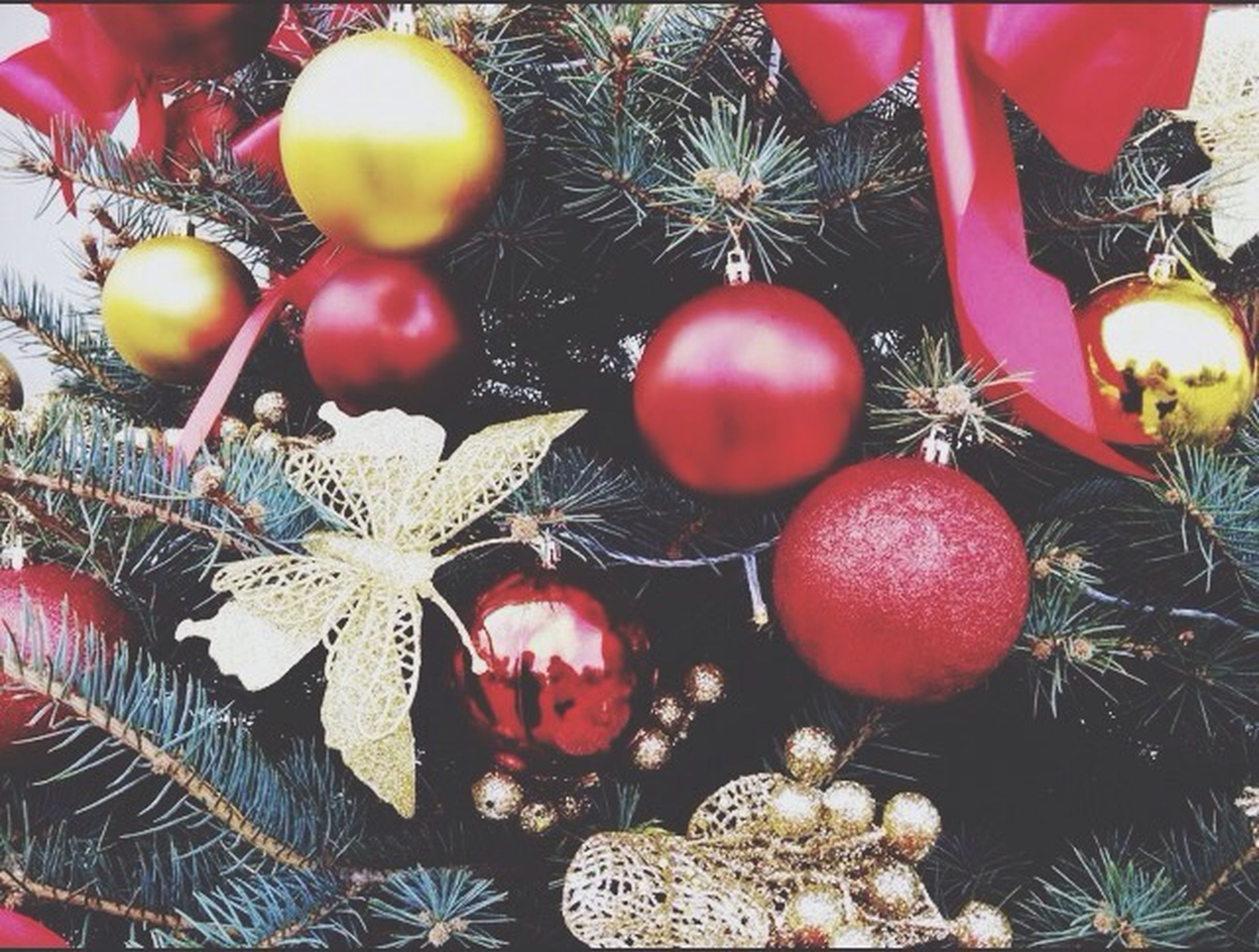 hanging, christmas, decoration, celebration, christmas decoration, christmas ornament, tradition, christmas tree, red, low angle view, cultures, fruit, close-up, traditional festival, christmas lights, indoors, decor, holiday - event, lantern, celebration event