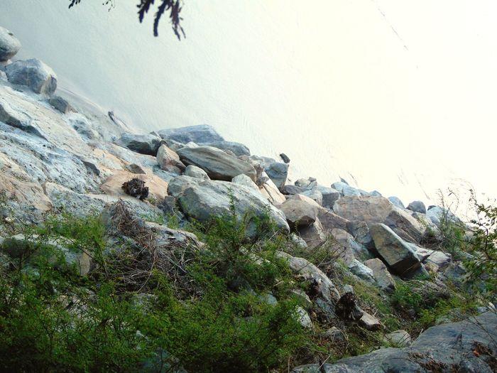 UnderSea Water Sea Beach Rock - Object Sky Animal Themes Rock Stone Coast Arid Landscape Pebble Beach