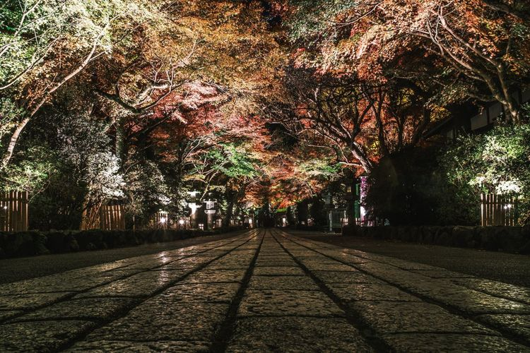 Street amidst trees in park during autumn