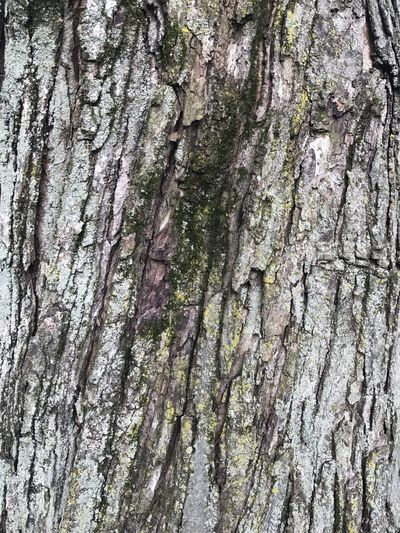 Tree bark Tree Trunk Tree Textured  Full Frame Bark Rough Close-up Growth No People Nature Day Wood - Material Outdoors Backgrounds Knotted Wood Beauty In Nature