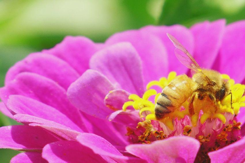 花 日本 蜂