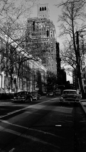 City Tree Road