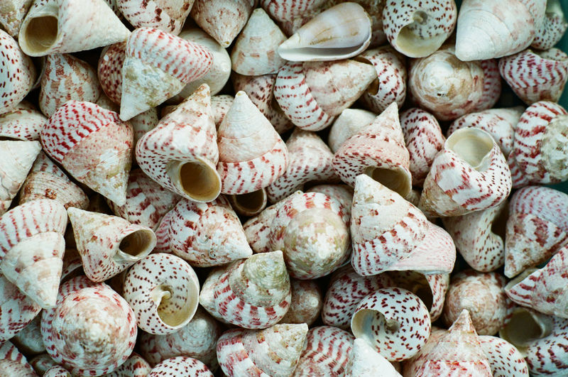 Film No Filter Pattern Pieces Plane Textured  Backgrounds Close-up Day Film Photography Freshness Large Group Of Objects Masarumiura No People Pattern Sea Shell