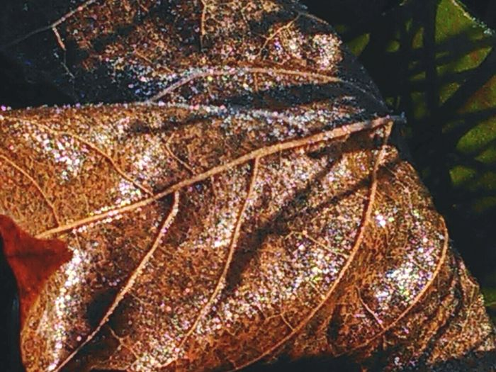 Close-up Leaf Nature Horizontal Freshness Outdoors Frozen Dewdrops Frosty Mornings Sparkle EyeEm Nature Lover EyeEm Best Shots - Nature EyeEm Strange Beauty Creative Light And Shadow Macroshot No People