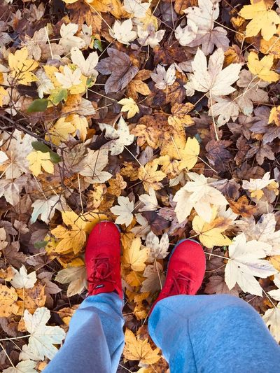yellow carpet Low Section Human Leg Personal Perspective Shoe Real People One Person Standing Body Part Human Body Part Lifestyles High Angle View Leaf Plant Part Autumn Day Leisure Activity Nature Land Directly Above