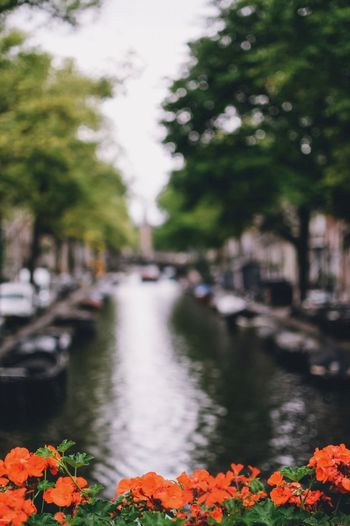 EyeEm Best Shots EyeEm Nature Lover EyeEm Gallery Plant Flower Water Flowering Plant Nature Tree Architecture Focus On Foreground Day Growth Built Structure Beauty In Nature Canal City No People Building Exterior Selective Focus Transportation Outdoors Flower Head Amsterdam