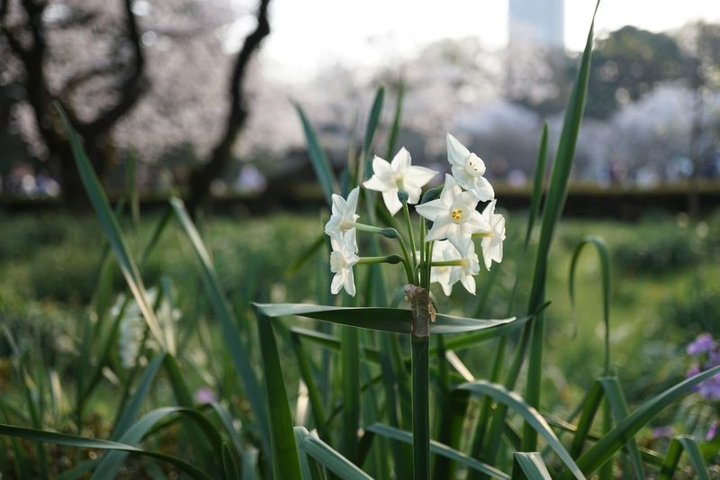 cityscapes Flower Nature Focus On Foreground Growth Petal Blooming Grass Plant Flower Head Close-up