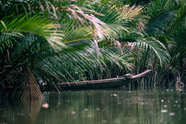 Boat amidst palm trees in lake